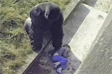 gorila Jambo