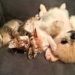gatitos y perrito