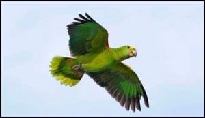 Loros - Verde