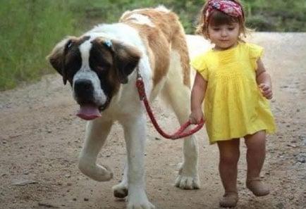 razas-de-perro-3