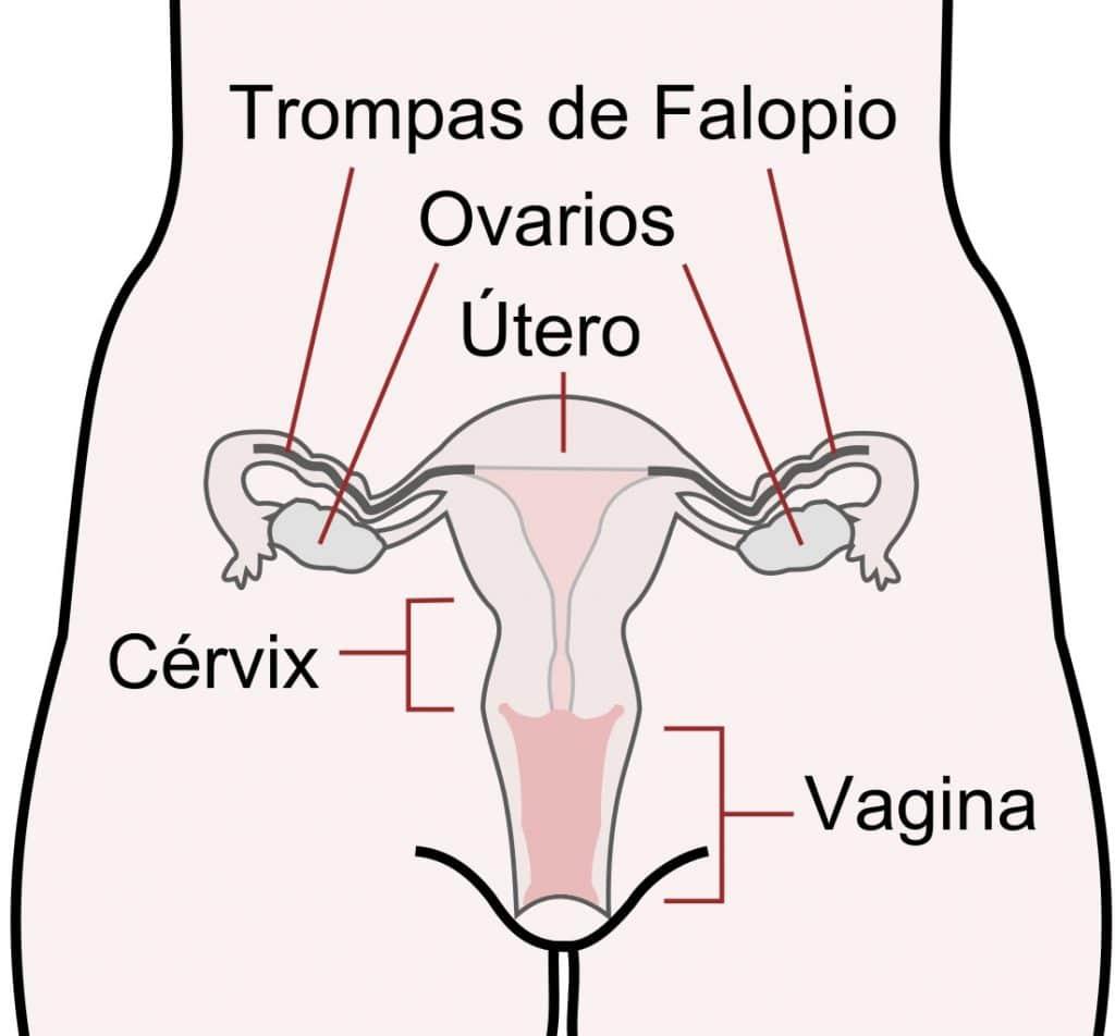 Trasplante de útero. Un hito en la cirugía de excelencia en España