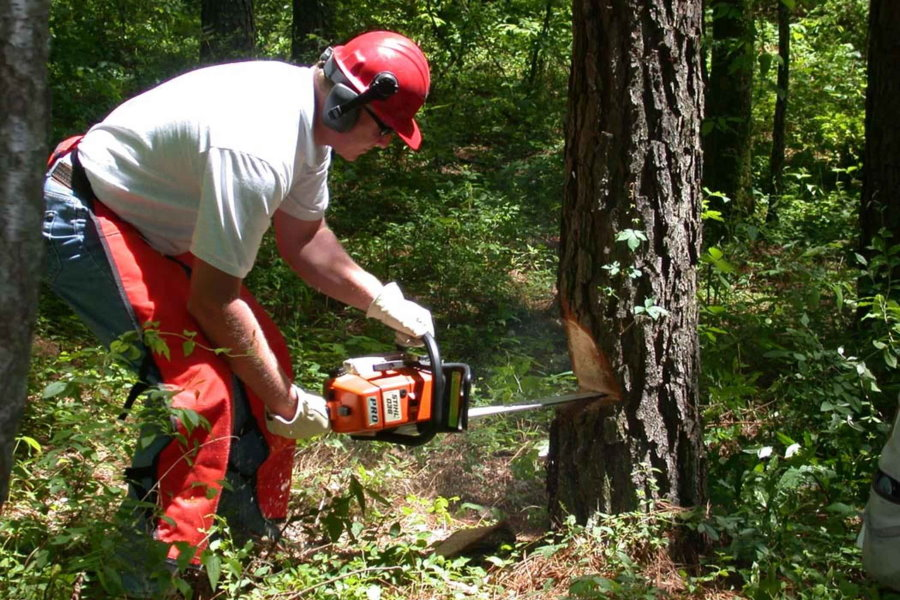 Cómo talar un árbol con una motosierra. Prevención y seguridad.
