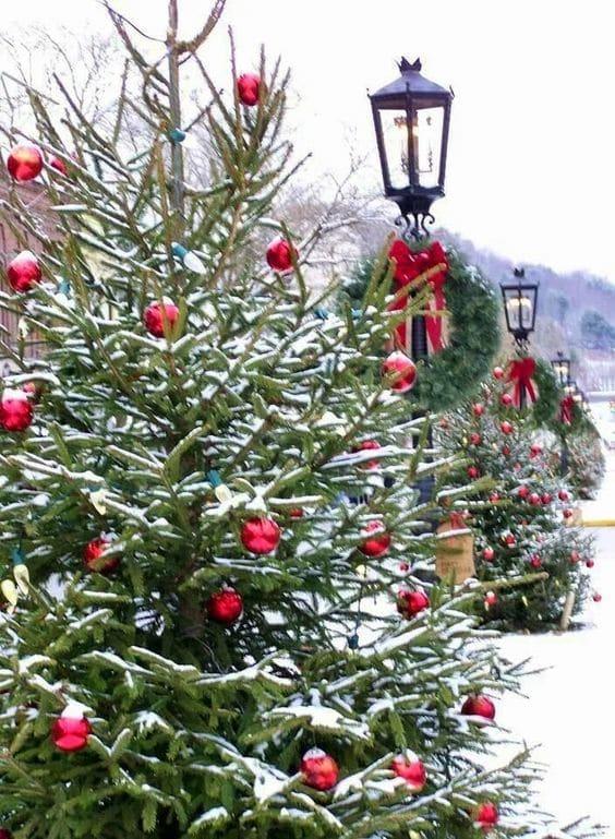 El abeto o pino, uno de los símbolos de la Navidad-2