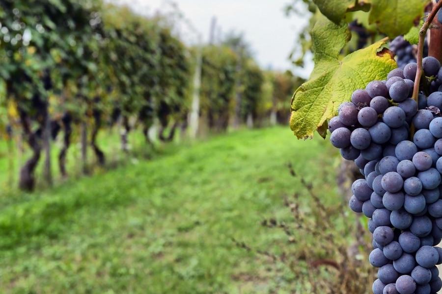 Tienda de vinos online consejos para elegir tu vino ideal