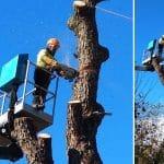 Tala de árbol, un trabajo complicado pero, en ocasiones, muy necesario