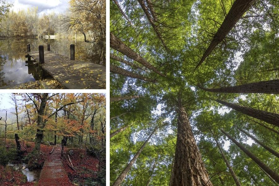 Los 5 Bosques más bonitos de España en Otoño, te los presentamos...