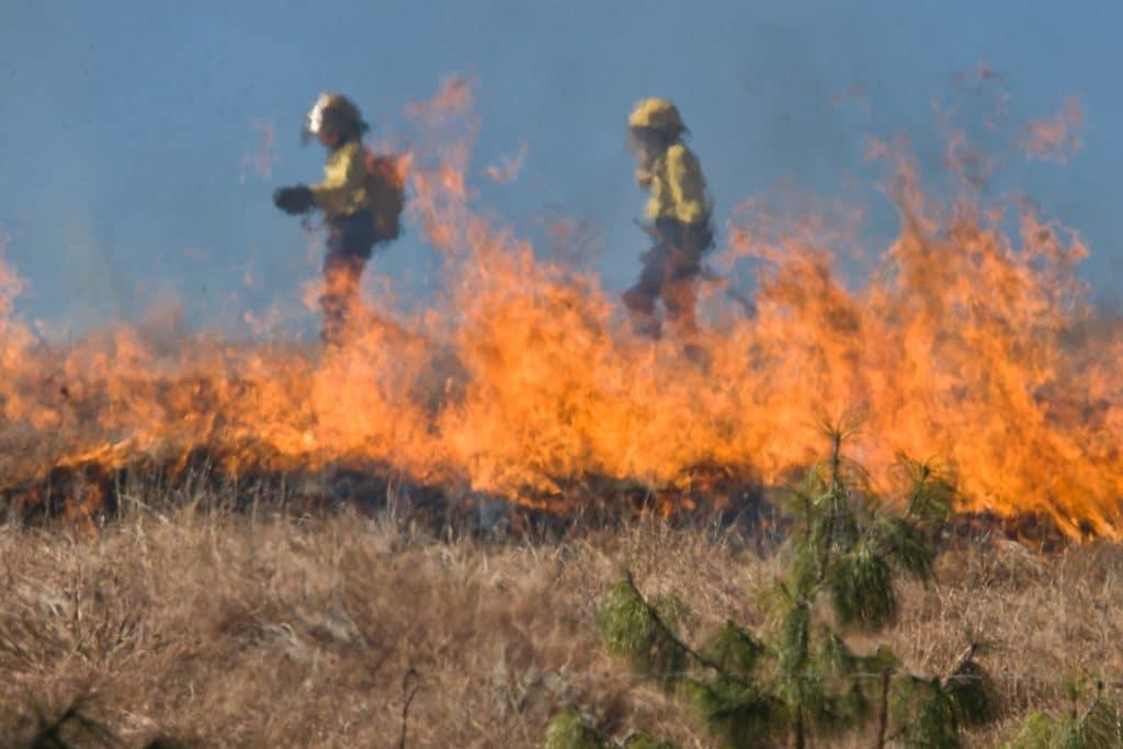 Desbroce en la Comunidad de Madrid la mejor prevención ante los incendios