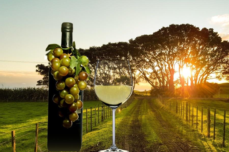 Cuáles son los mejores vinos verdes portugueses